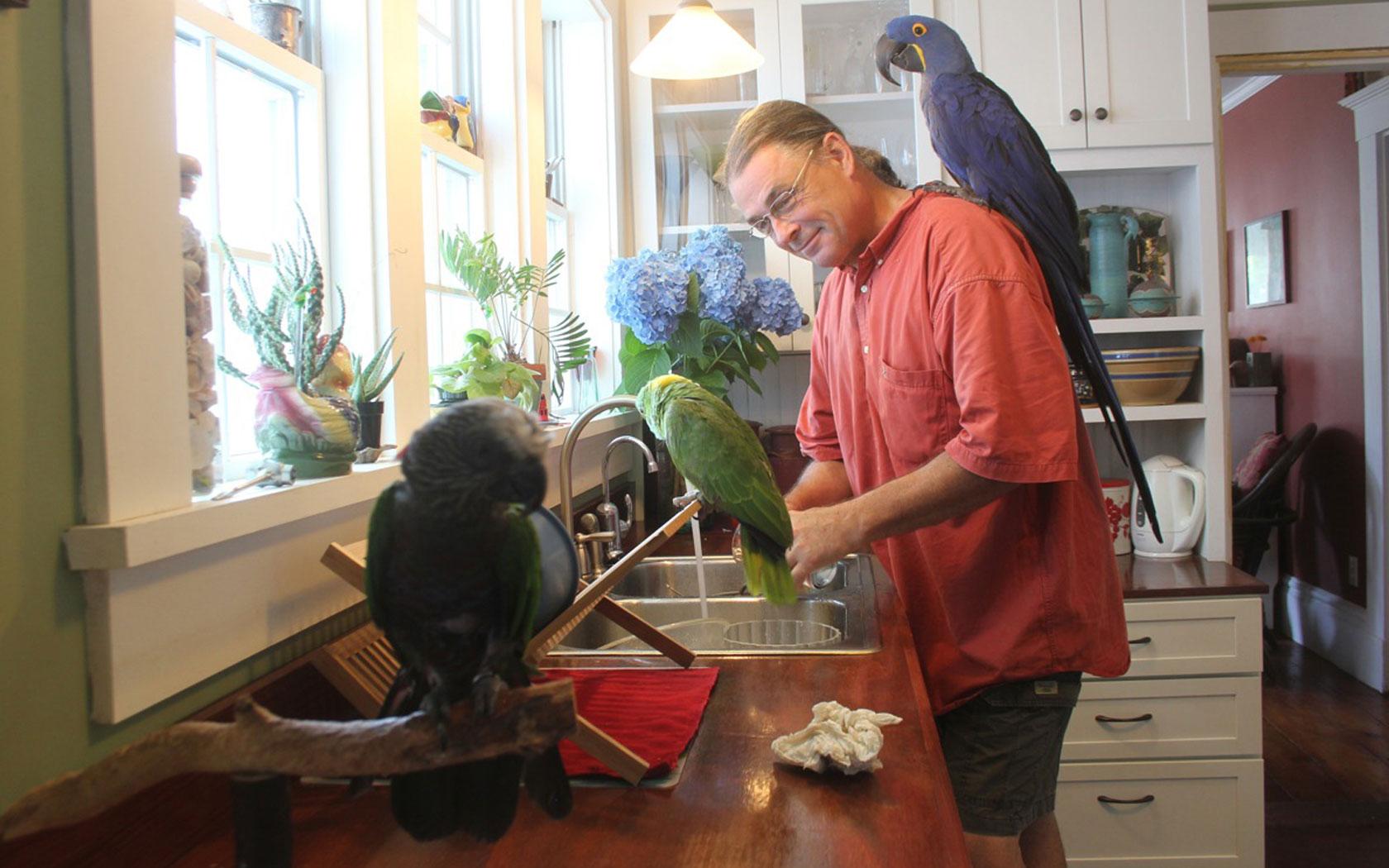 Buy Baby African Grey Parrot Online